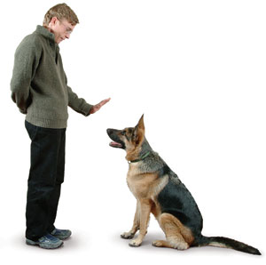 dog obedience trainer